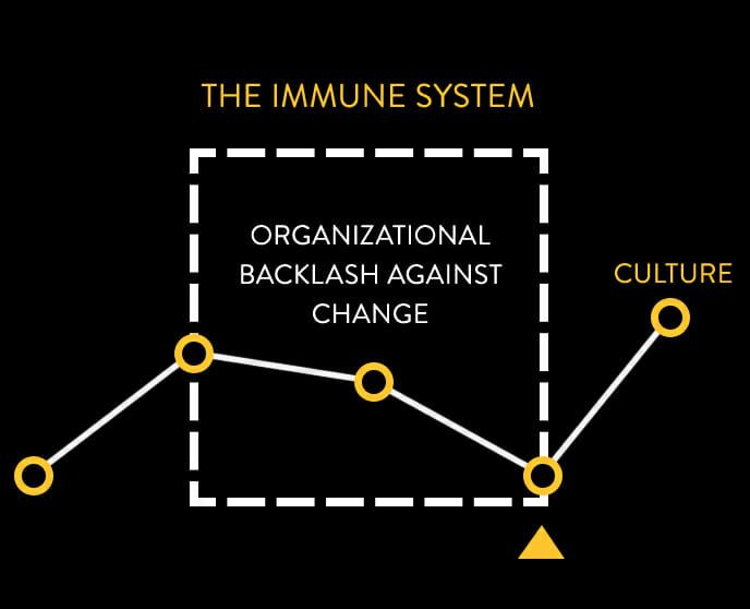 Animation of the Immune System